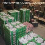 Palets para exportación