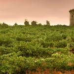 Los viñedos de Marcelino