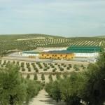 La Betica Aceitera Degusta Jaen (2)