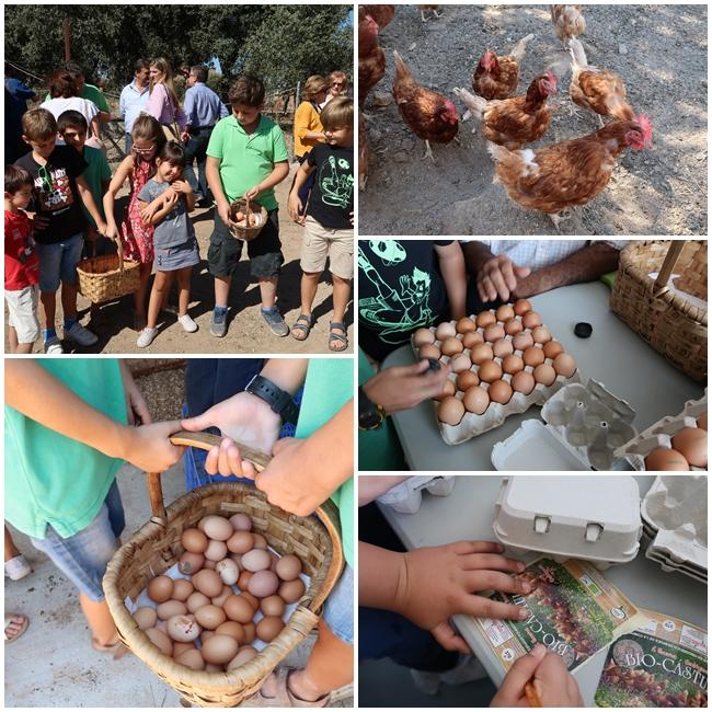 Huevos Bio Castulo 2