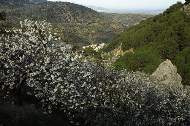 Sierra Mágina naturaleza